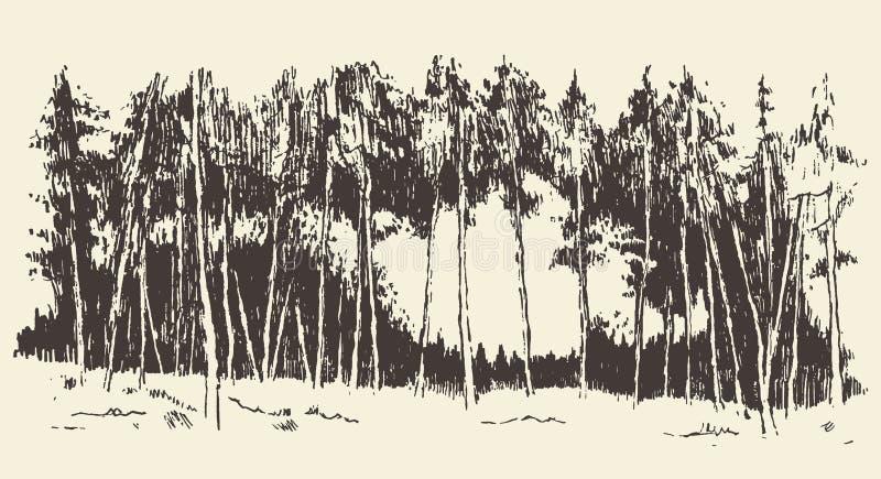 Ręka rysujący krajobrazowy jedlinowy lasowy łąkowy wektor ilustracja wektor