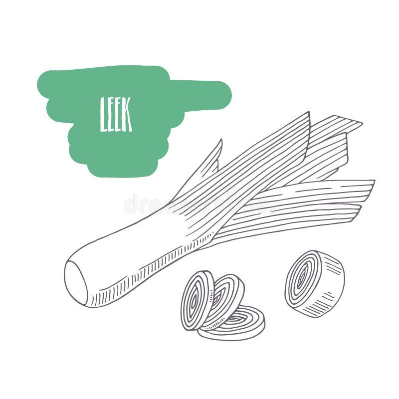 Ręka rysujący leek odizolowywający na bielu Kreśli stylowych warzywa z plasterkami dla rynku, kuchni lub jedzenia pakunku projekt ilustracja wektor