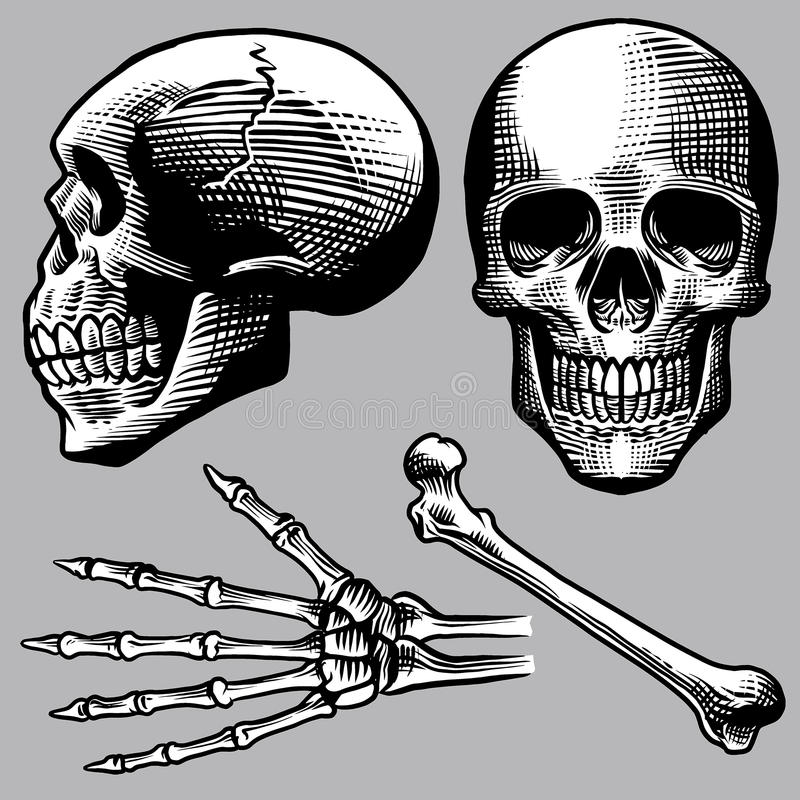 Ręka rysujący ludzki czaszka set ilustracja wektor
