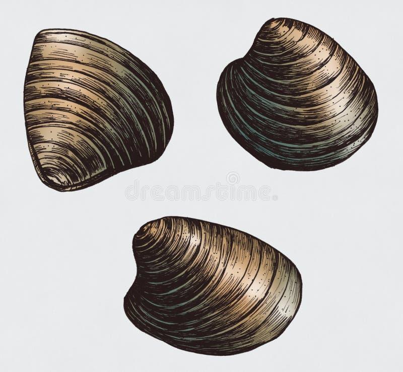 Ręka rysujący milczka bivalve mollusk ilustracja wektor