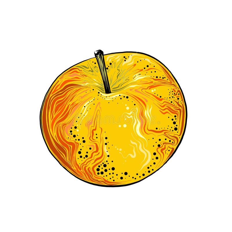 Ręka rysujący nakreślenie jabłko w kolorze pojedynczy bia?e t?o Rysuj?cy dla plakat?w, dekoracji i druku, wektor ilustracja wektor