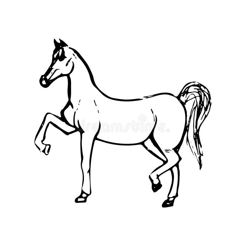 Ręka rysujący nakreślenie koń Czarny kreskowy rysunek odizolowywający na białym tle Wektorowa zwierzęca ilustracja royalty ilustracja