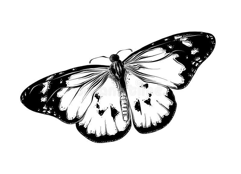 Ręka rysujący nakreślenie motyl w czarnym kolorze pojedynczy białe tło Rysujący dla plakatów, dekoracji i druku, royalty ilustracja