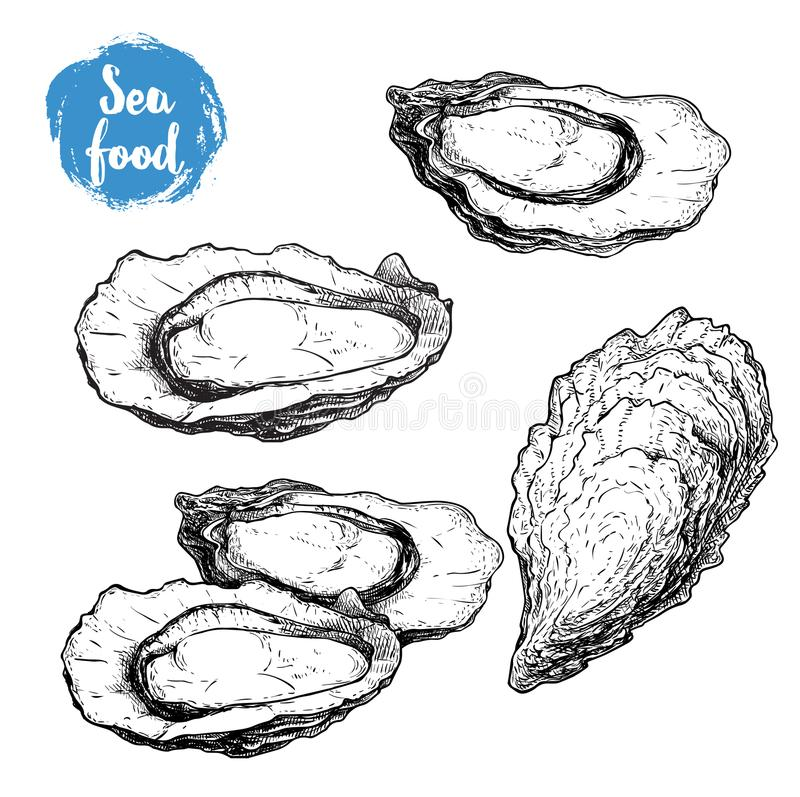 Ręka rysujący nakreślenie ostrygi set Ręka rysująca ilustracja świeży owoce morza Odizolowywający na białej tło kolekci royalty ilustracja