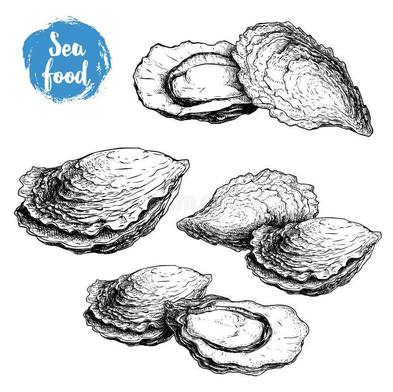 Ręka rysujący nakreślenie ostrygowi składy ustawiający Ręka rysująca ilustracja świeży owoce morza Odizolowywający na białej tło  ilustracja wektor