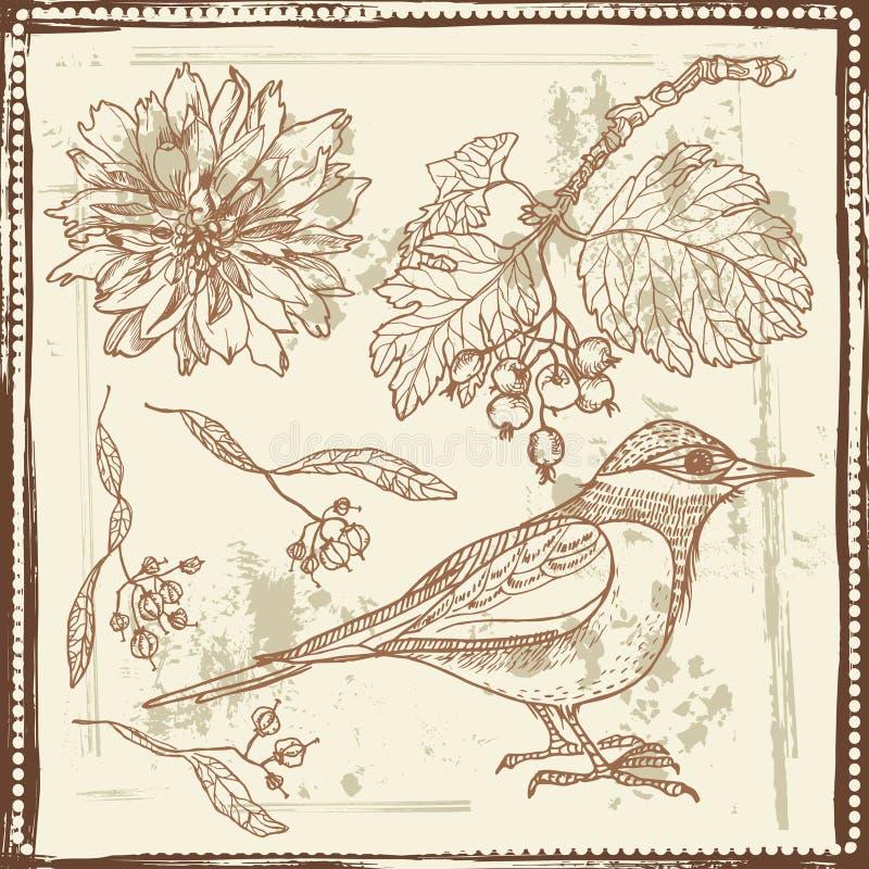 Ręka rysujący nakreślenie ptak, jesieni jagody i kwiaty, ilustracja wektor