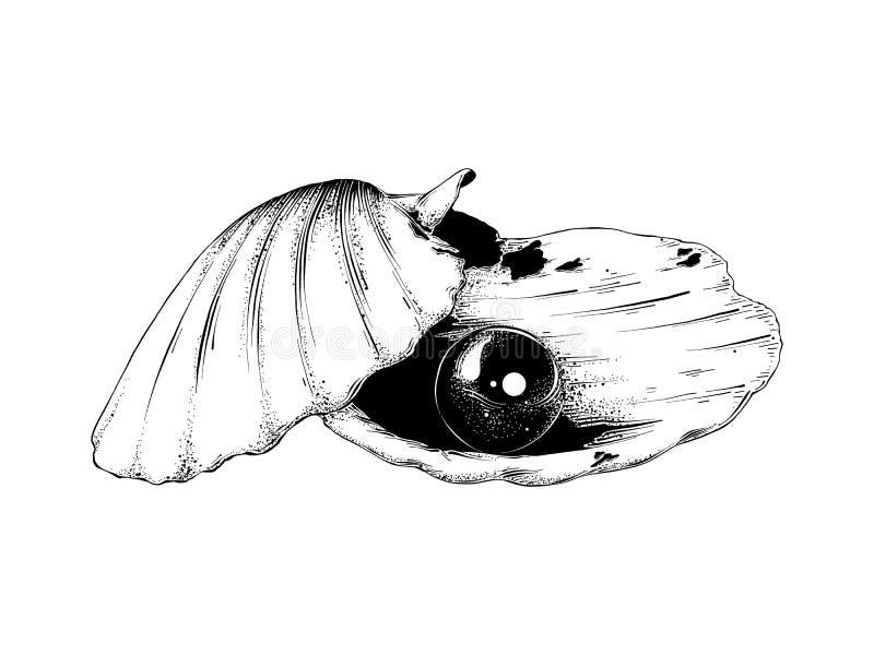Ręka rysujący nakreślenie skorupa z perłą w czerni odizolowywającym na białym tle Szczegółowy rocznik akwaforty stylu rysunek royalty ilustracja