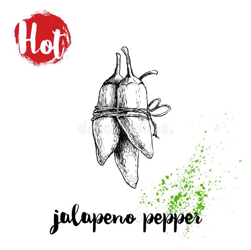 Ręka rysujący nakreślenie stylu jalapeno peppertwine gorący plakat Czerwona etykietka z gorącym znakiem również zwrócić corel ilu ilustracja wektor