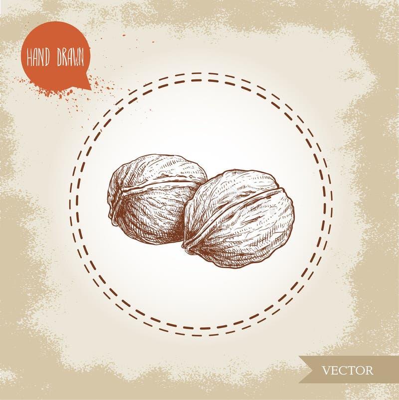 Ręka rysujący nakreślenie stylu orzechów włoskich skład Eco karmowego składnika wektoru ilustracja royalty ilustracja