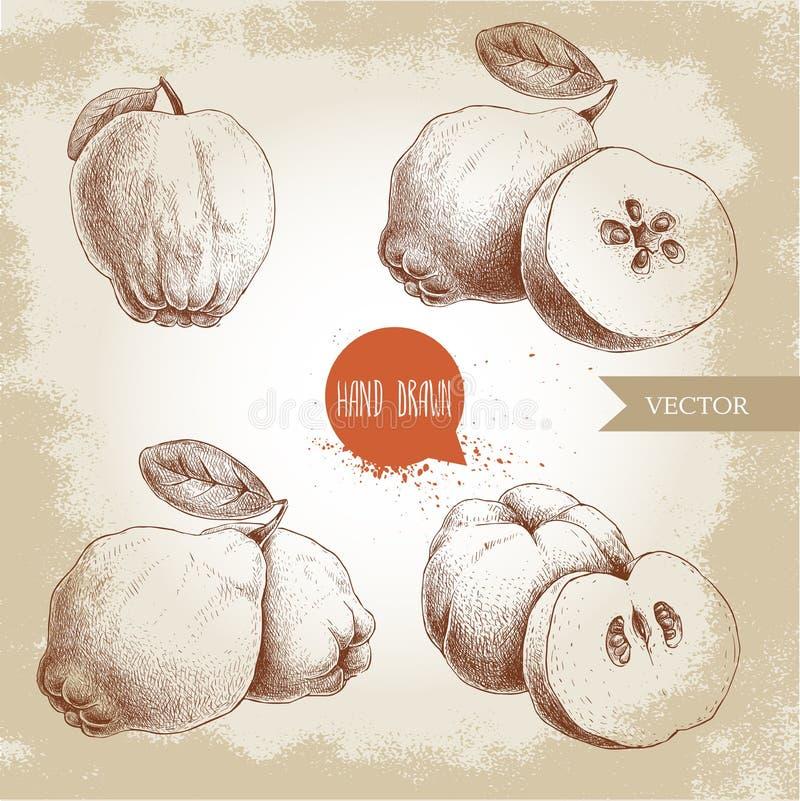 Ręka rysujący nakreślenie stylu set pigwy Pigwy jabłko z liściem, grupą pigwy i pokrojoną pigwą, royalty ilustracja