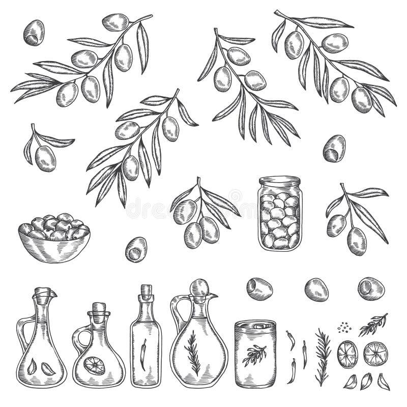 Ręka rysujący oliwny grafika set również zwrócić corel ilustracji wektora ilustracji
