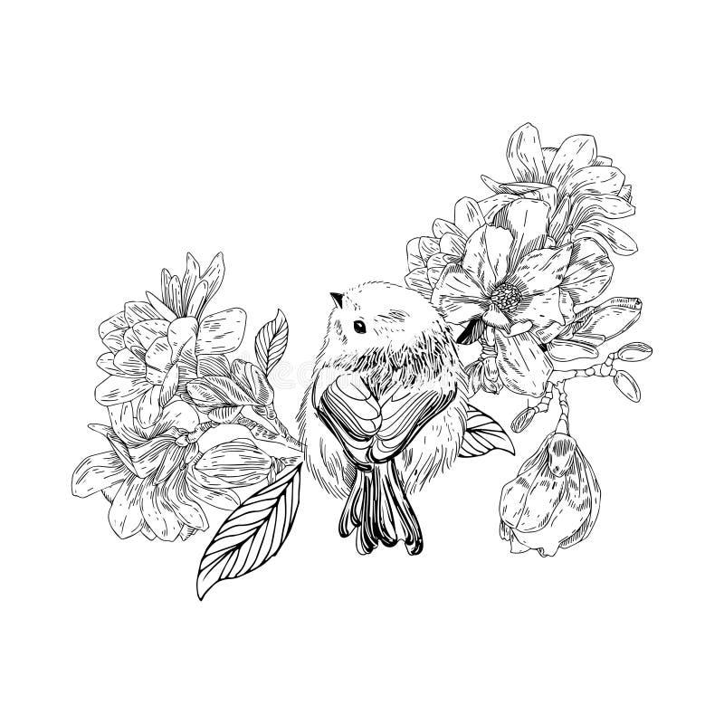 Ręka rysujący ptak z kwiatami w rocznika stylu Wiosna ptaki siedzi na okwitnięcie gałąź Liniowa grawerująca sztuka Odizolowywając ilustracji