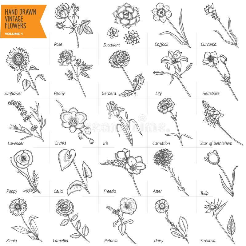 Ręka rysujący roczników kwiaty ustawiający Pióro grafika kwiecista royalty ilustracja