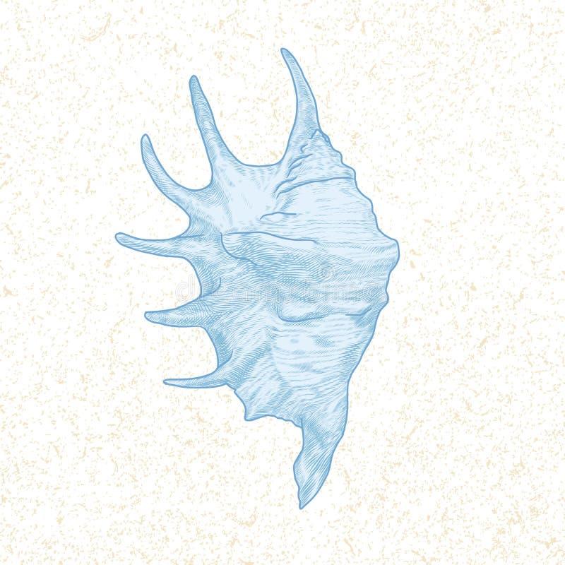 Ręka Rysujący Seashell ilustracja wektor