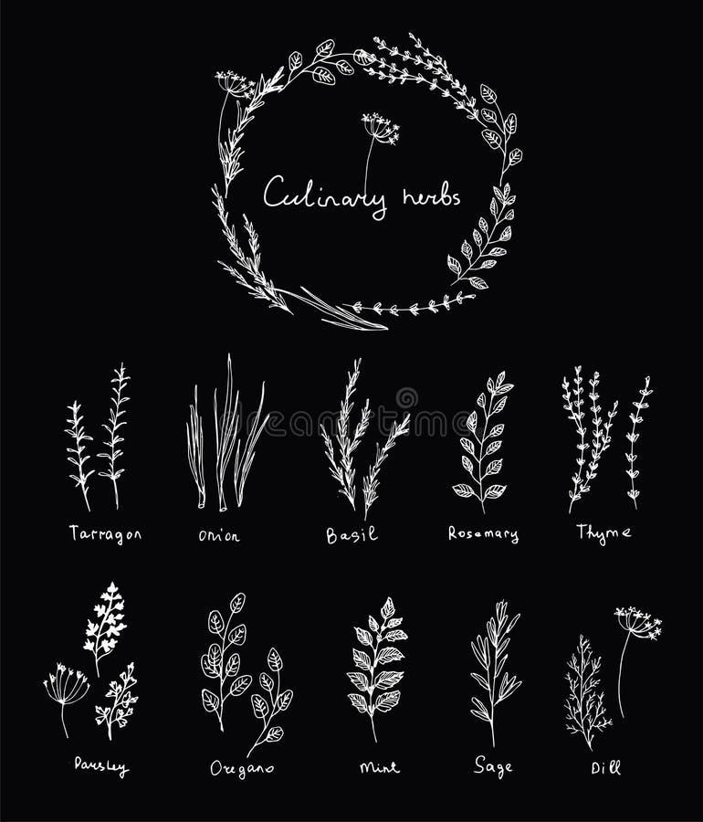 Ręka rysujący set kulinarny ziele Basil, mennica, rozmaryny, mędrzec, macierzanka i pietruszka, Karmowy projekta logo royalty ilustracja