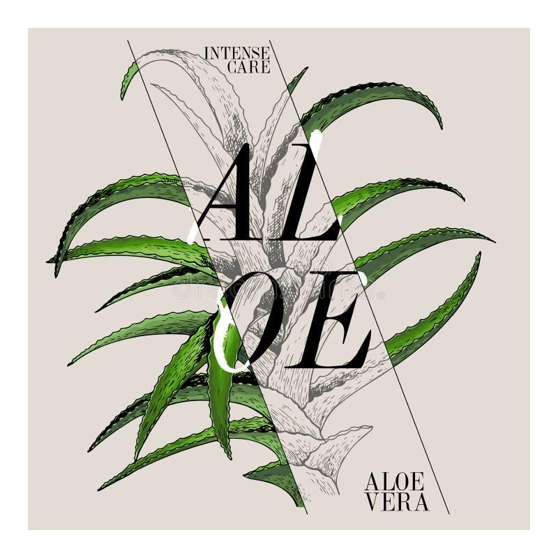 Ręka rysujący set piękno produktu etykietki projekt Wektorowy aloesu Vera kosmetyk Typografia szablon Grawerująca sztuka essentia ilustracji