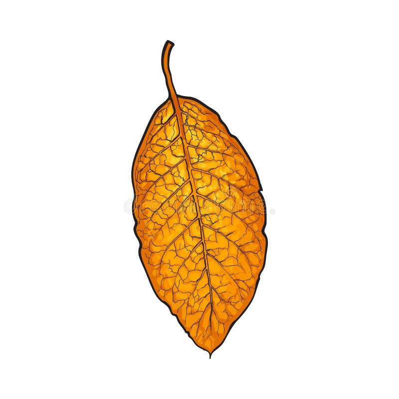 Ręka rysujący suchy tabaczny liść, wektorowa ilustracja na białym tle ilustracja wektor