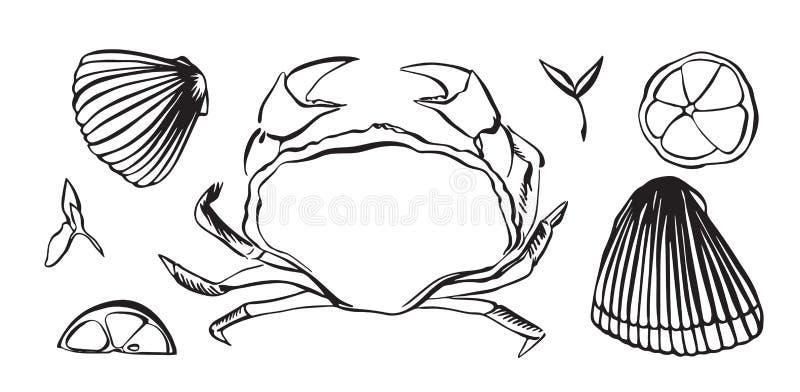 Ręka rysujący wektorowy ilustracyjny krab jako owoce morza Shellfish z cytryną i ziele Czerń odizolowywający na białym tle ilustracja wektor