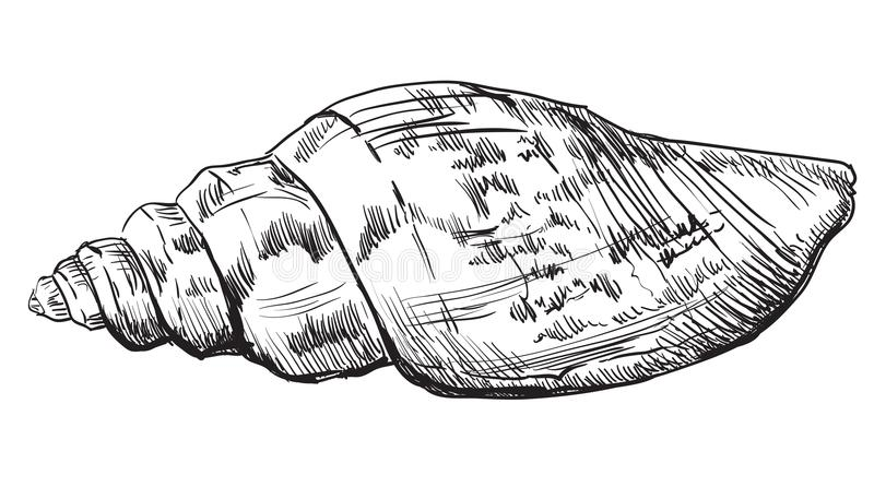 Ręka rysuje seashell-3 royalty ilustracja
