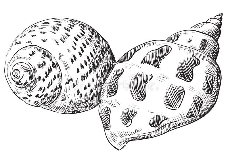 Ręka rysuje seashell-21 ilustracji