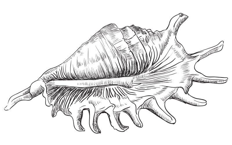 Ręka rysuje seashell-22 ilustracji