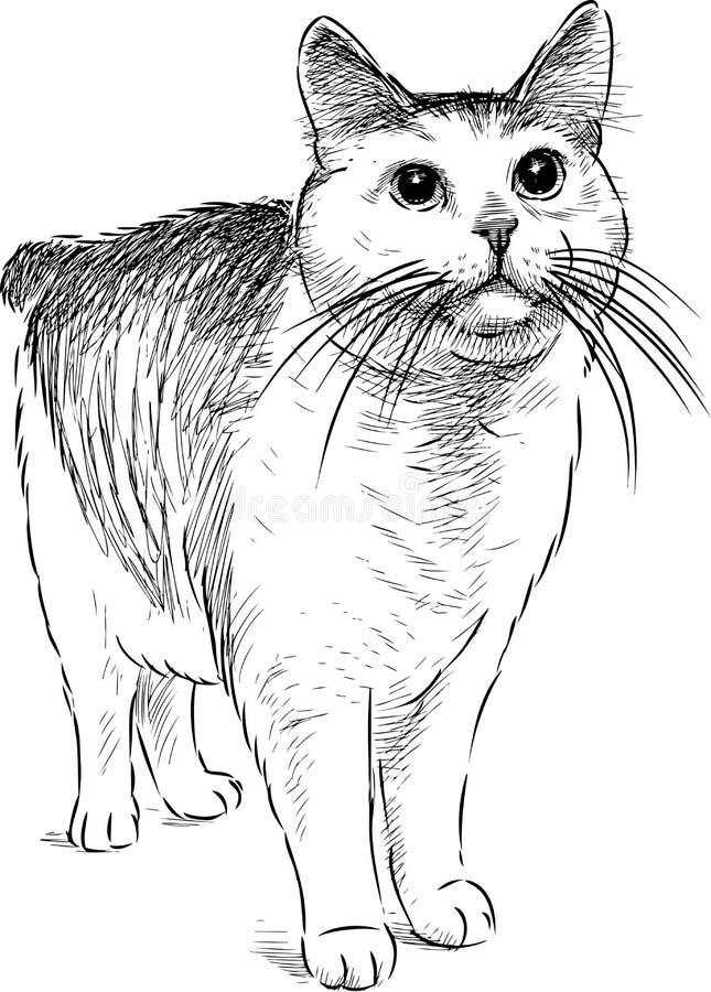 Ręka rysunek dopatrywanie domowy kot ilustracji