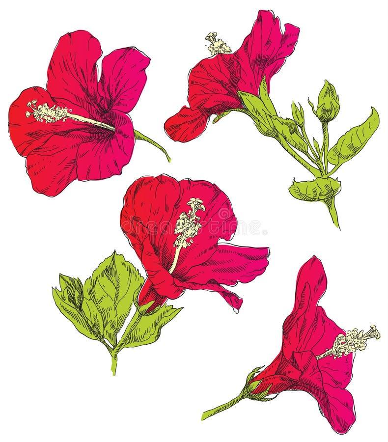 Ręka rysunku kwiat ilustracji