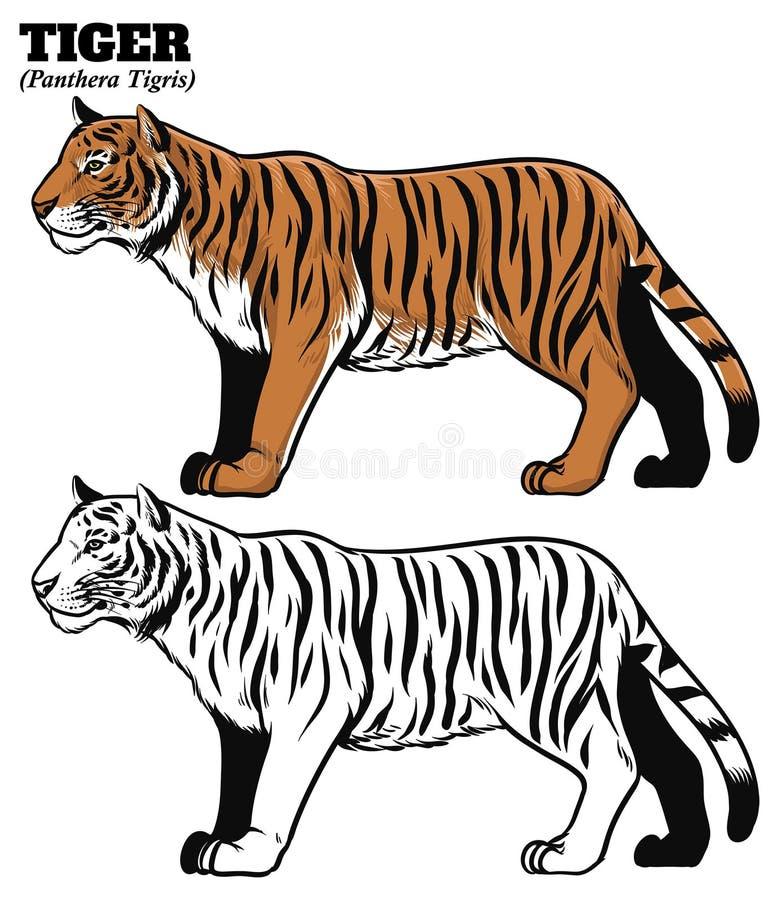 Ręka rysunku styl tygrys ilustracja wektor