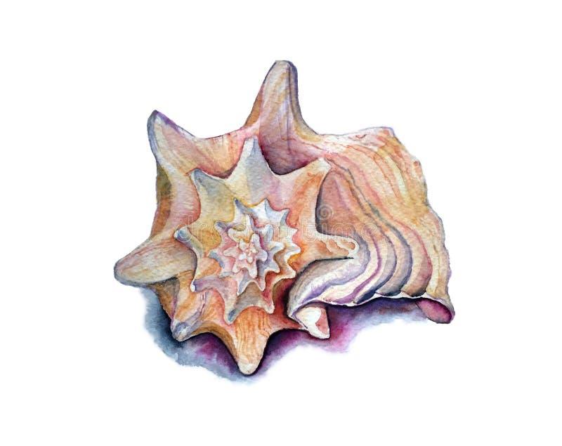 Ręka tonie seashell ilustracji
