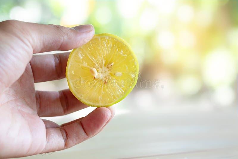 Ręka trzyma świeżą cytrynę z natury tłem fotografia stock