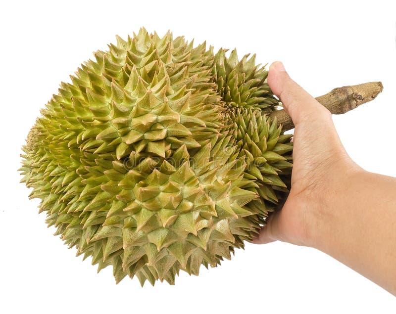 Ręka Trzyma Świeżego Dojrzałego Durian na Białym tle fotografia stock