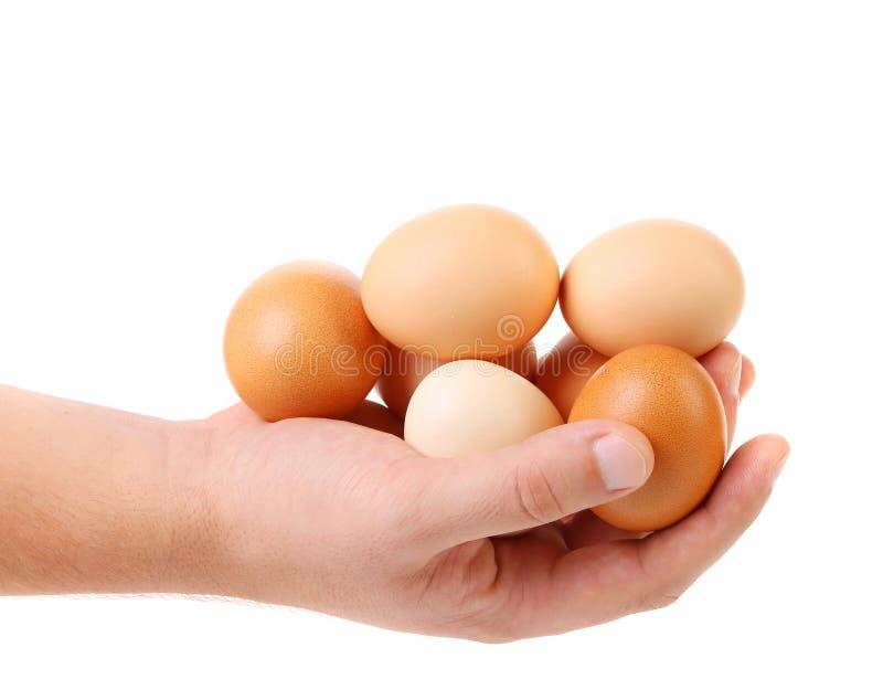 Ręka trzyma brown jajka fotografia royalty free