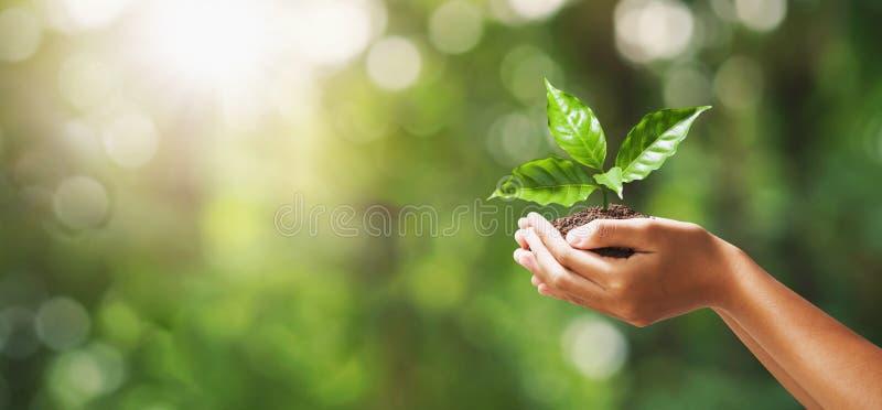 ręka trzyma młodej rośliny na plamy zieleni natury tle poj?cia eco ziemski dzie? obrazy stock
