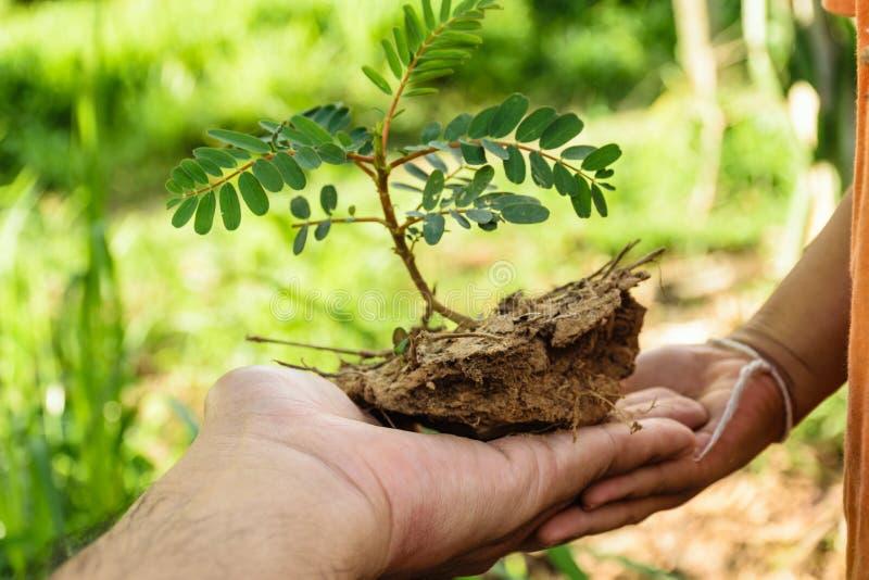 Ręka trzyma małego drzewa zdjęcia stock