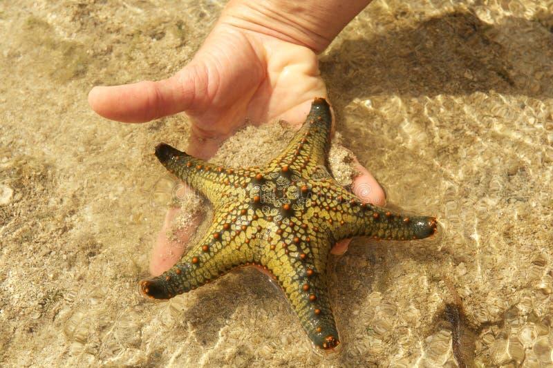 Ręka trzyma rozgwiazdy zdjęcie royalty free