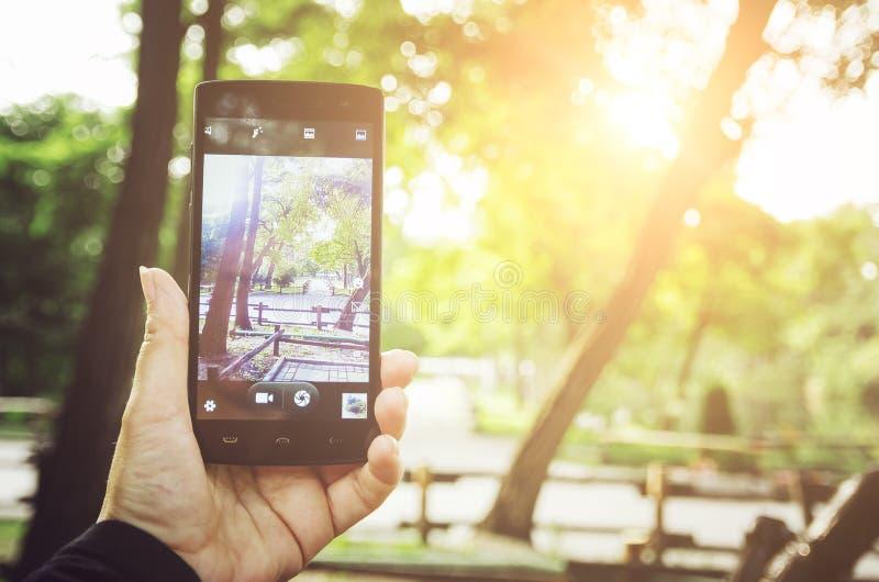 Ręka trzyma telefon komórkowego, bierze obrazek używać telefon w parku Przestrzeń dla teksta fotografia royalty free