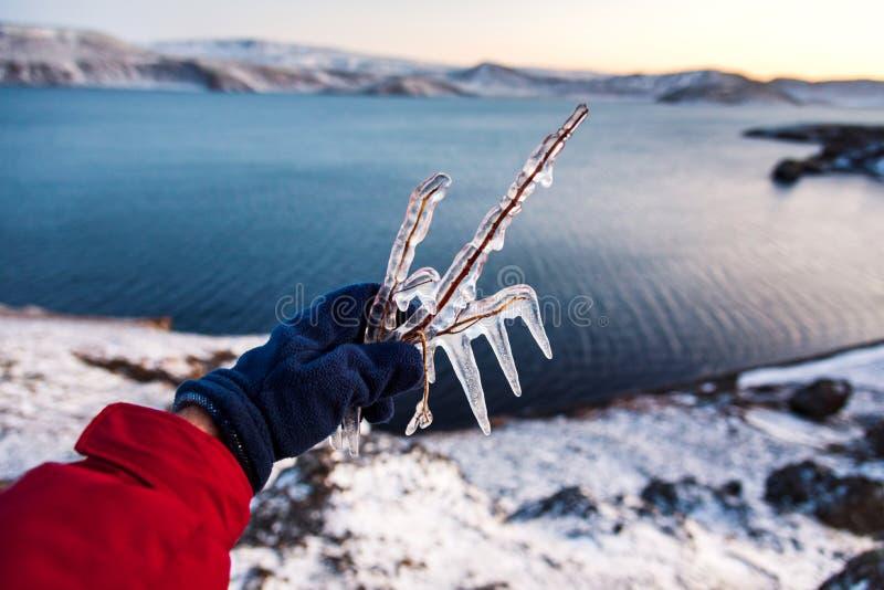 Ręka trzyma zamarzniętą gałąź zamknięta w górę zdjęcia royalty free