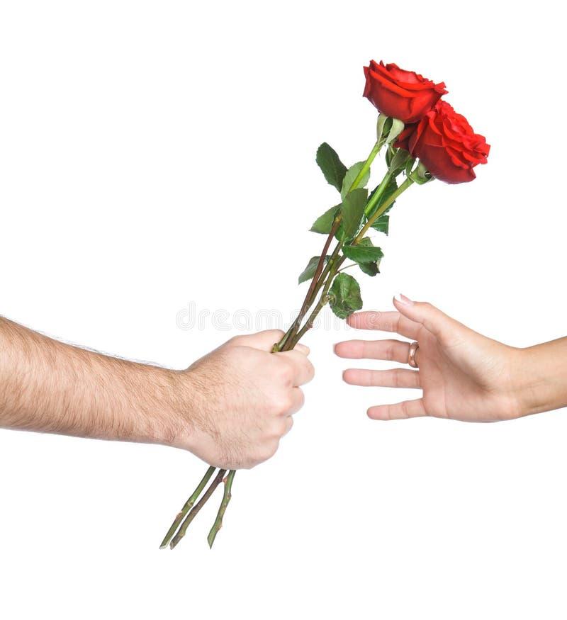 ręka trzymająca kwiat zdjęcie stock