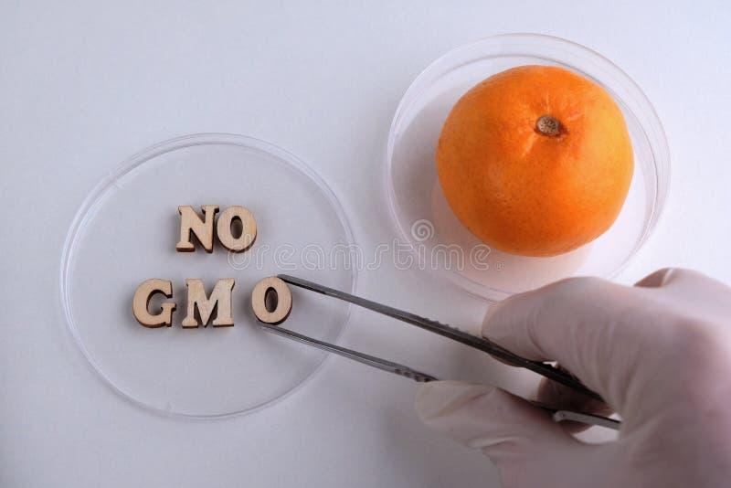R?ka w bia?ej medycznej r?kawiczce z pincetami stawia drewnianego list O w Petri naczynie Zwrot ?adny mandarynka na lab i GMO fotografia stock
