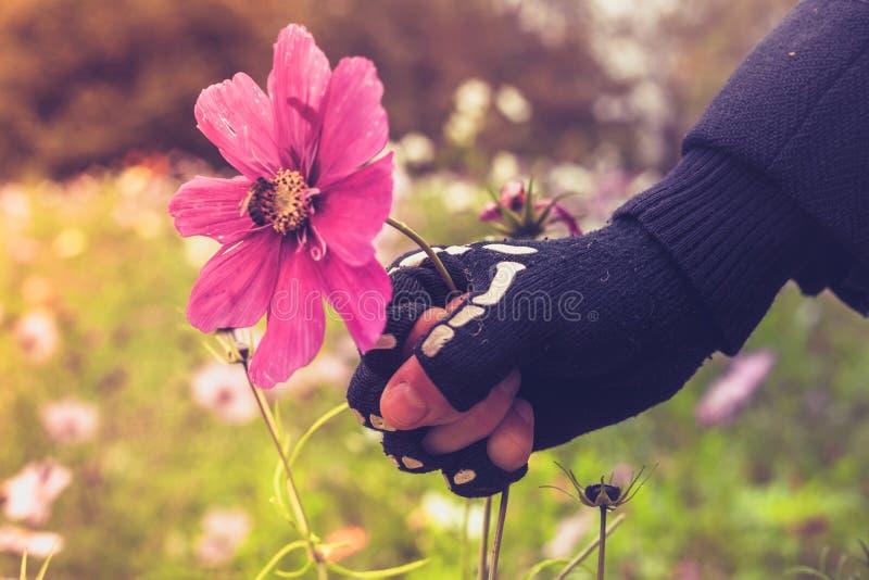 Ręka w zredukowanej rękawiczce brutalnie chwyta kwiatu z pszczołą obraz stock