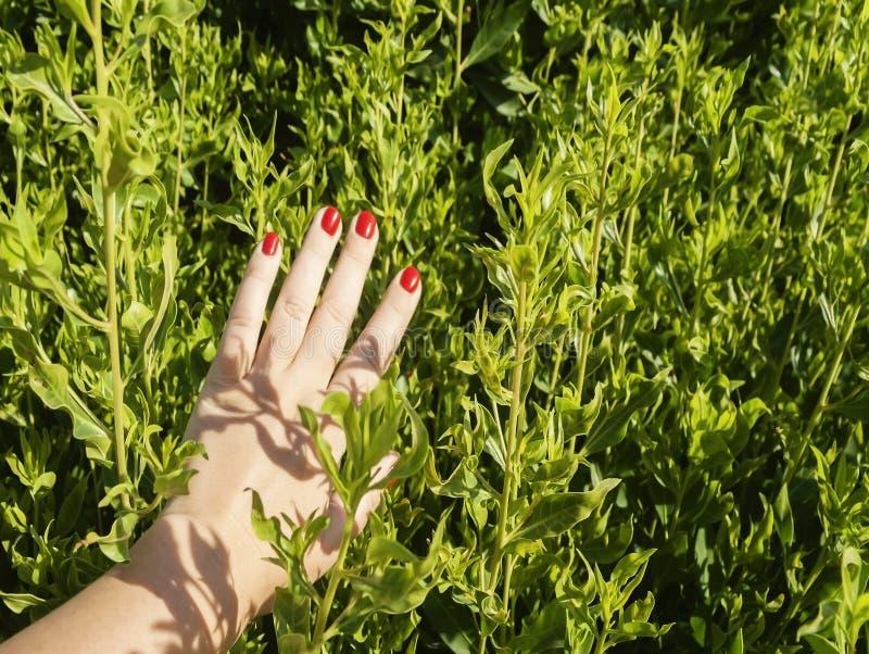 Ręka z czerwienią przybija lying on the beach na liściach krzak zdjęcie royalty free