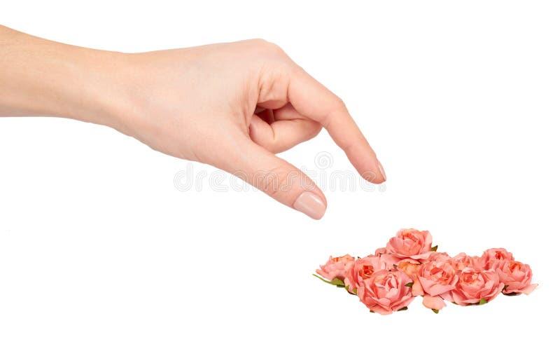 Ręka z kwitnienie menchiami kwitnie, dekoracyjna roślina, romantyczny nastrój zdjęcia royalty free