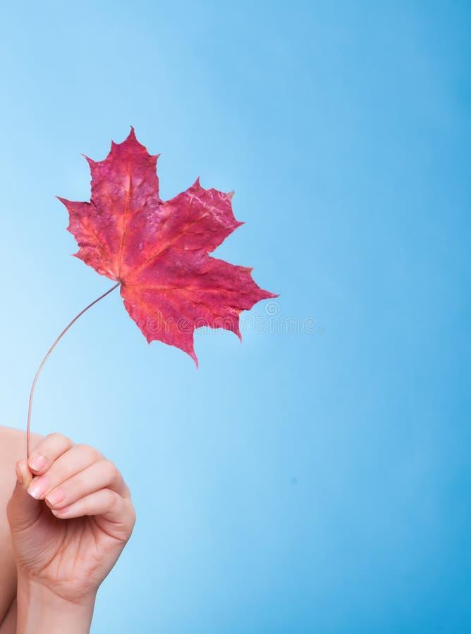 Ręka z liścia klonowego symbolu suchą kapilarną skórą. obraz stock