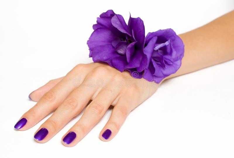 Ręka z purpur manicure'em i kwiatami obrazy stock