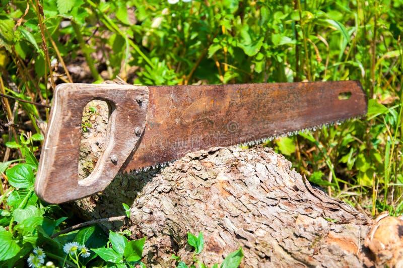 Ręka zobaczył cięcia gęsty drzewny bagażnik zdjęcia stock