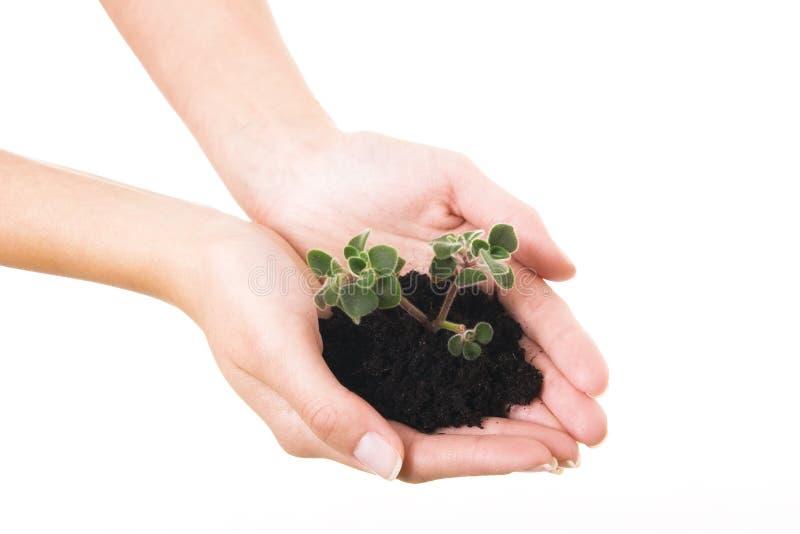 ręki życia nowa roślina fotografia stock