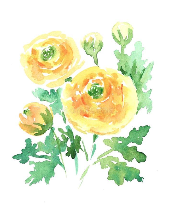 Ręki boho rysunkowej akwareli kwiecista ilustracja z ranunculus kolorem żółtym kwitnie, gałąź, liście ilustracji