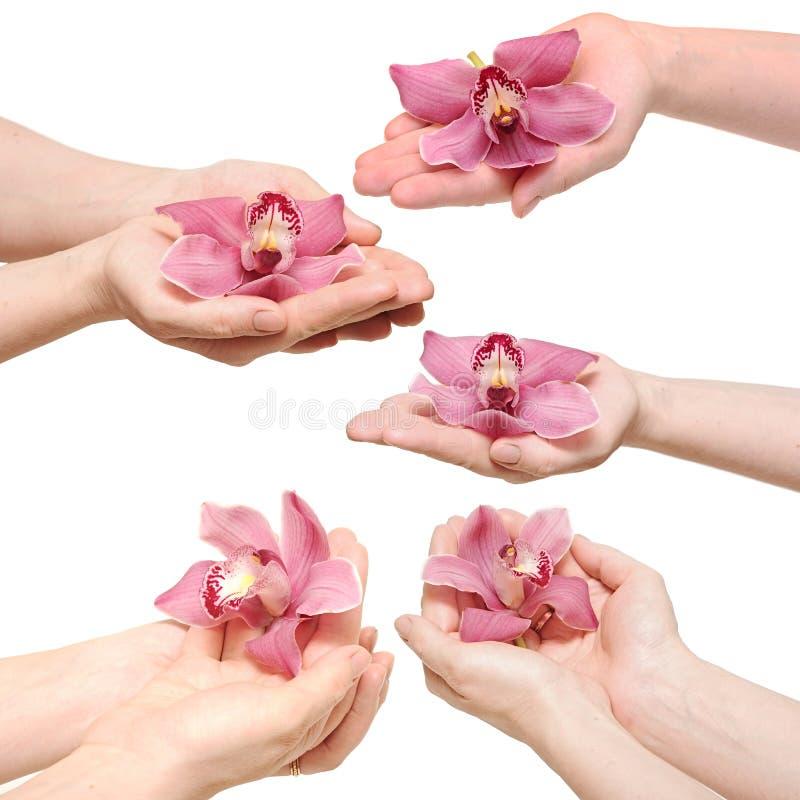 Ręki i orchidea obraz stock
