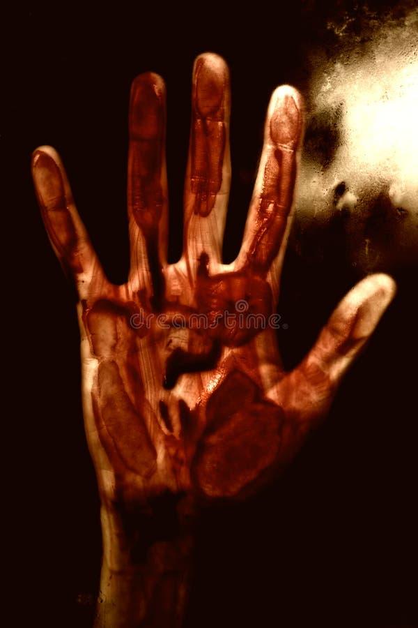 ręki krwionośna istota ludzka fotografia royalty free