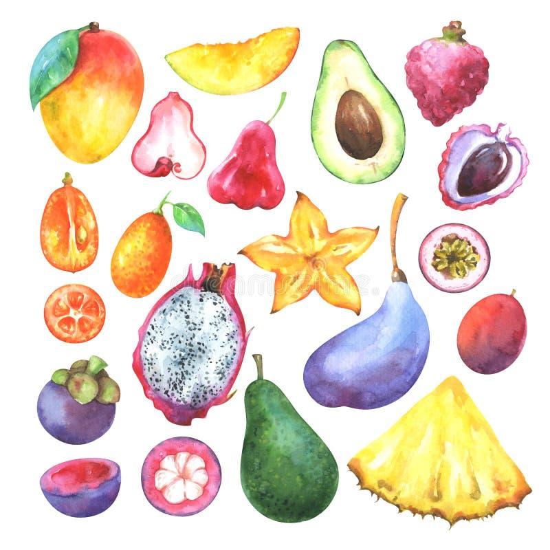 Ręki malować egzotyczne owoc ustawiać ilustracja wektor